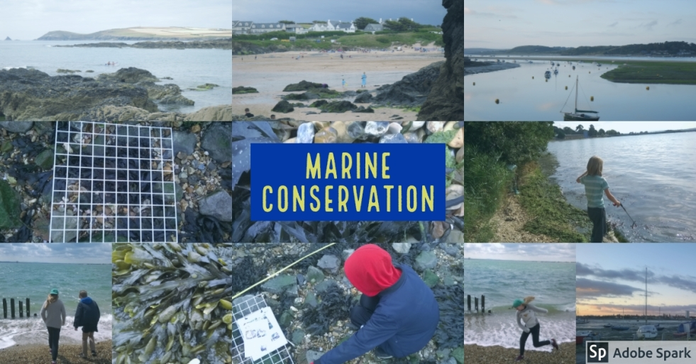 Marine Conservation Graphic